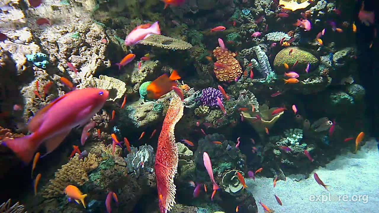 Tropical Fish – Wrasse and Anthias Long Beach, California